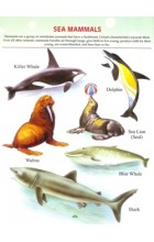 My First Book of Sea Animals